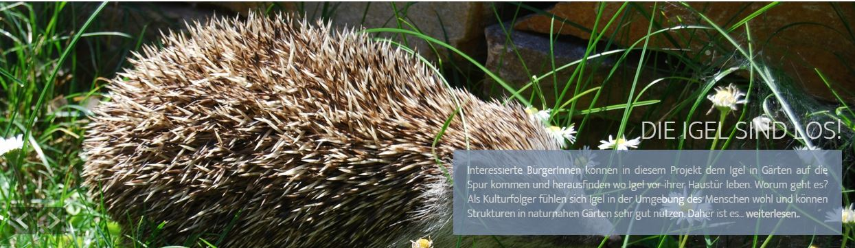 citizen-science_Intro Igel